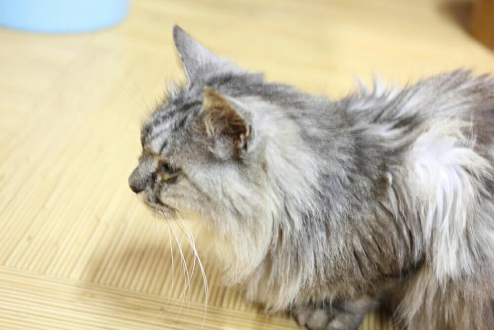 屋久島銭湯の猫